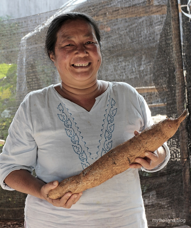Thai woman with tapioca root