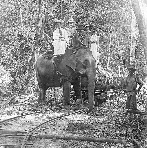 Old Photo of Thailand Elephant in 1908.